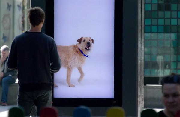 Ter promotie van adoptie uit het asiel volgen de honden op deze billboards voorbijgangers