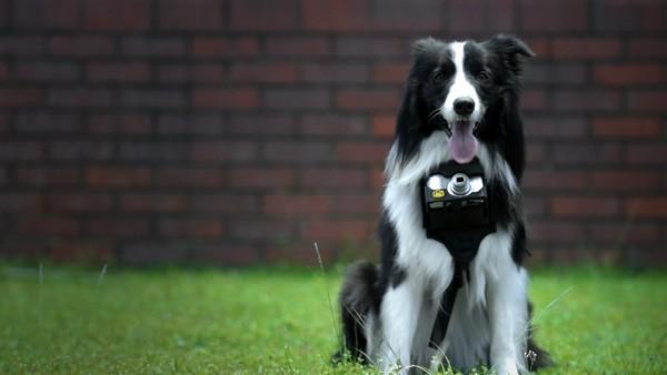 Met dit systeem van Nikon maakt je hond foto's als hij opgewonden raakt