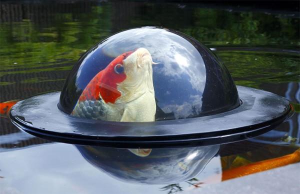 Met de Floating Fish Dome kunnen je vissen buiten een kijkje nemen