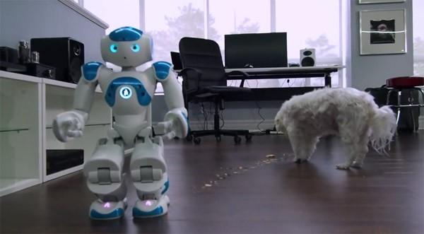 Slecht idee: een robot die een hond probeert te voeren