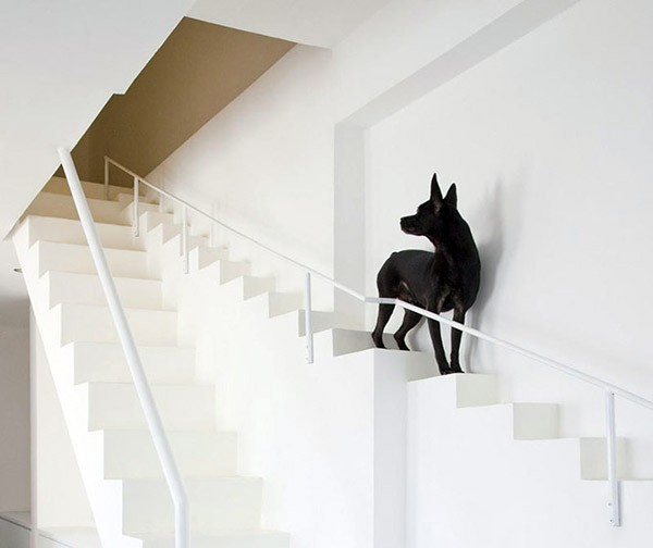 huis-trap-honden2