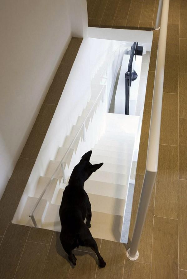 huis-trap-honden3