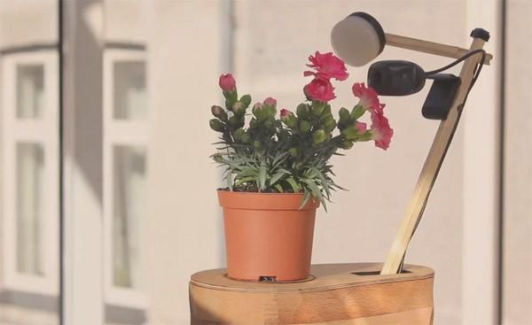 Selfie Plant: een plantje dat de mooiste foto's van zichzelf probeert te maken