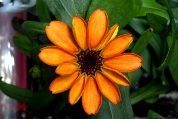 bloem-ruimte2