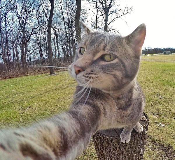 Pientere kat blijkt uitstekende selfie-fotograaf