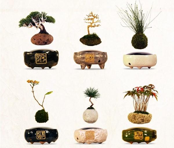 Dankzij magneten kunnen deze bonsaiboompje zweven