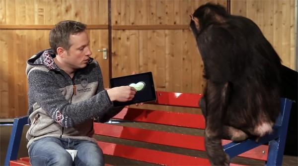 Ook chimpansees zijn onder de indruk van iPad-goocheltrucs