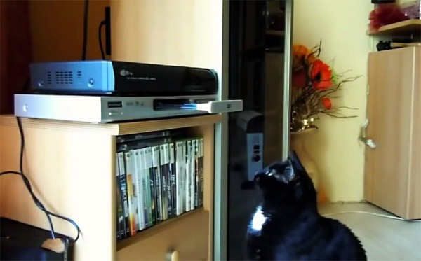 DVD-spelers brengen katten in de war