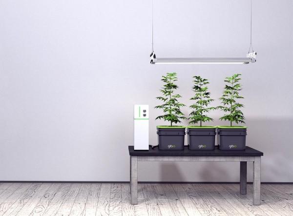 Gro.io: een geautomatiseerde indoor groentetuin