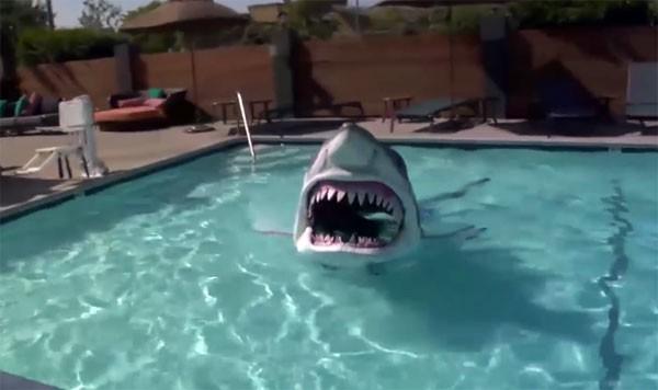Haai met elektronica jaagt hotelgasten de stuipen op het lijf