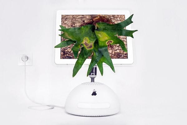 apple-computer-plantenbak5