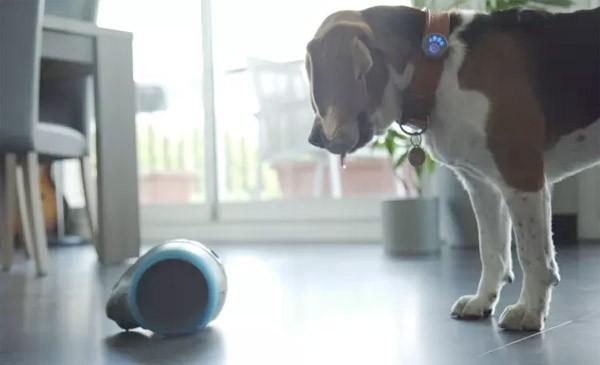 Laika: een interactieve metgezel voor je hond