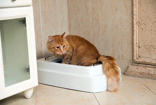 Catolet: een toilet voor je hond of kat