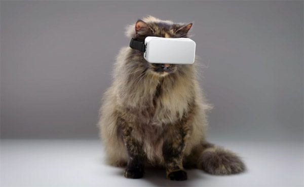 CatVR: virtual reality voor je poes
