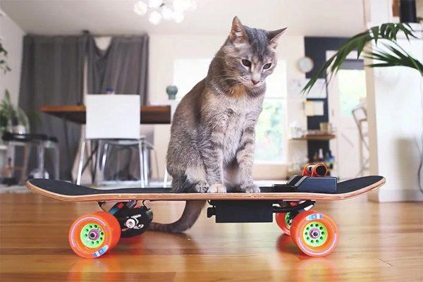 Ontwerper bouwt elektrisch skateboard voor zijn luie kat