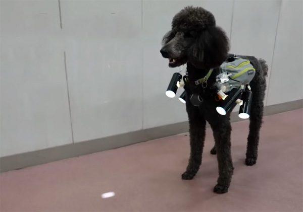 Wetenschappers hebben een hond op afstand bestuurbaar gemaakt