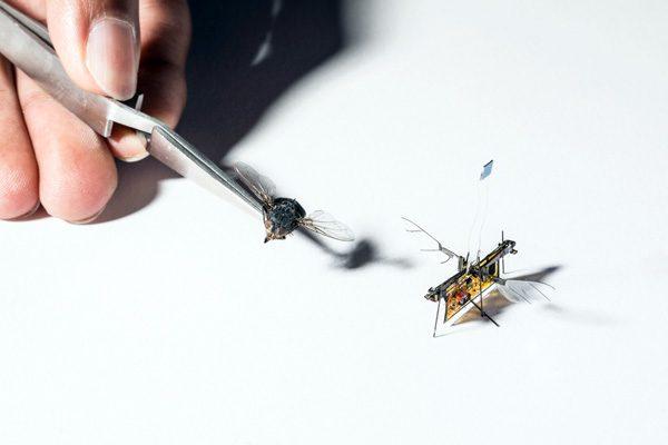 RoboFly: een robotvlieg die elektriciteit krijgt van een laser