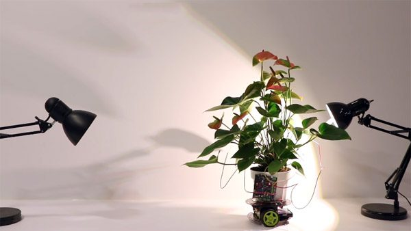 Deze robotplant gaat zelf op zoek naar een plekje met licht
