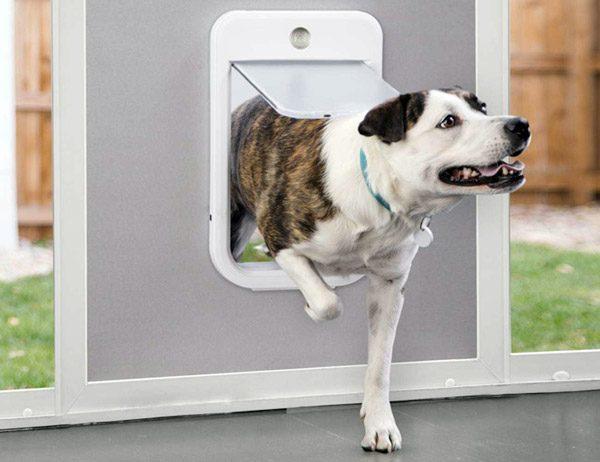 Go Smart Door: een katten- en hondenluik met een internetverbinding