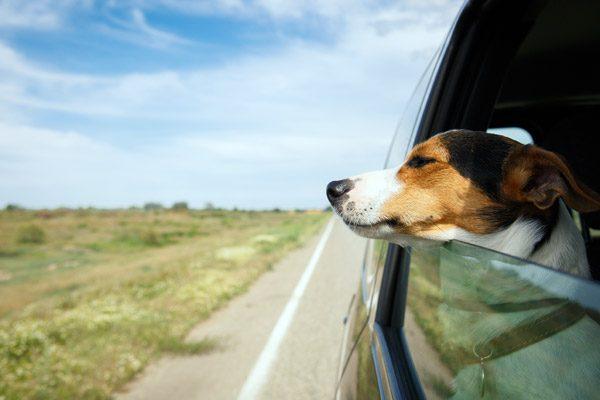 De Tesla Model 3 krijgt een modus die speciaal ontwikkeld is voor jouw hond