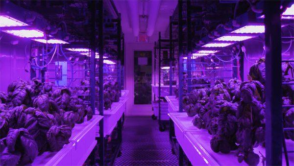 Hoe voedselcomputers een agriculturele revolutie kunnen beginnen