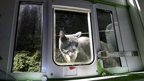 Slim kattenluikje ziet of de kat dode dieren bij zich heeft