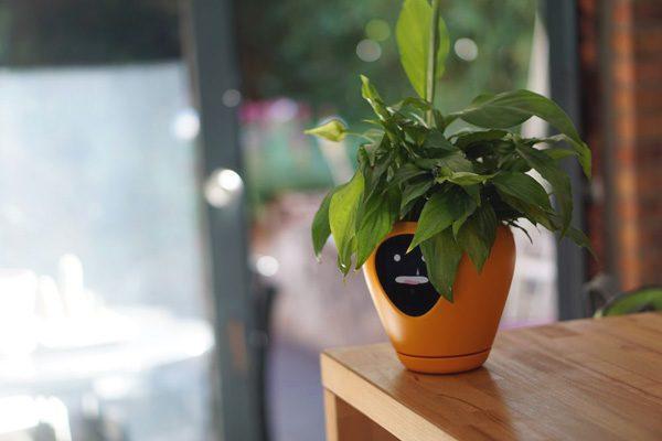Lua geeft planten een gezicht, waarmee ze laten zien wat ze nodig hebben