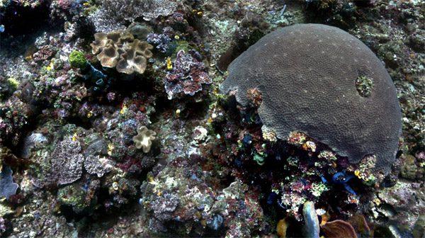 Dit algoritme verwijdert het water uit onderwaterfoto's