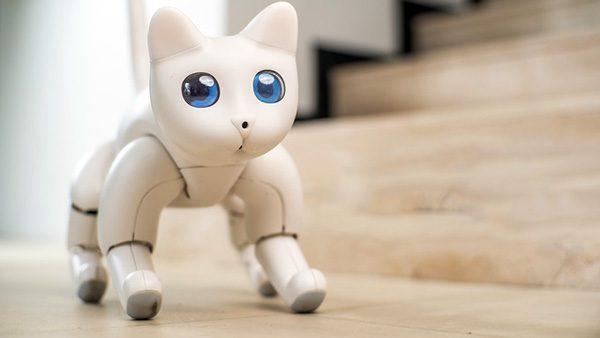 Je kunt op Kickstarter nu een robotkat reserveren