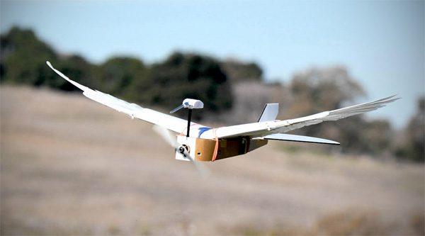 PigeonBot: een robot die vliegt als een duif