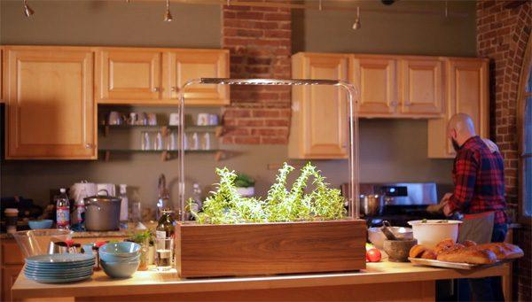 Herb Garden: de perfecte indoor kruidentuin