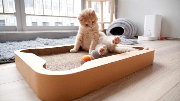 Cheerble: bordspellen en een robotbal voor katten