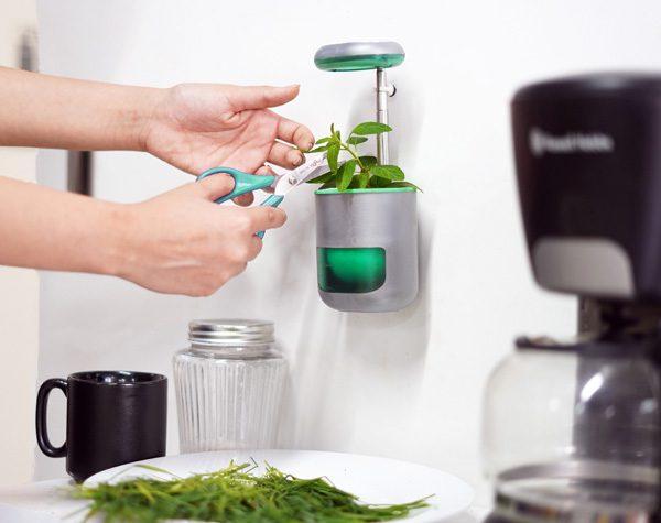 Het Pico mini-tuintje voor binnen haalt meer dan een miljoen op via Kickstarter