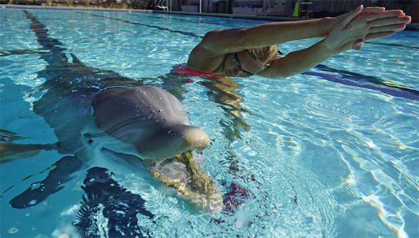 Deze robot-dolfijn is moeilijk van een echt exemplaar te onderscheiden