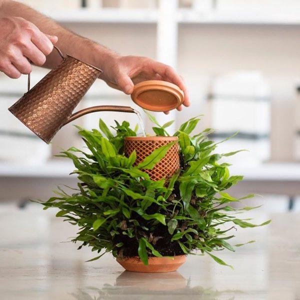 Terraplanter: Kickstarter-hit laat planten groeien zonder aarde