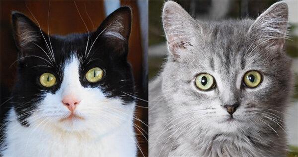 Website maakt kunstmatige katten met kunstmatige intelligentie